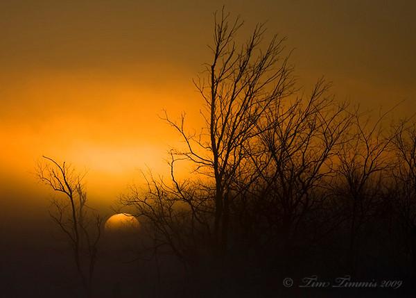 Sunrise at Brazos Bend state park