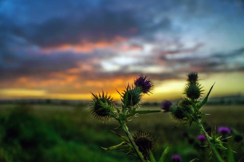 A scottish sunrise  near by Stanton Prior looking towards Bath 5/8/16