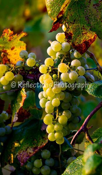 Sunset Hills Vineyard 2011