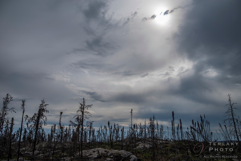 Hazy clouds over the burnt forest.