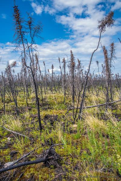 Burnt marsh.
