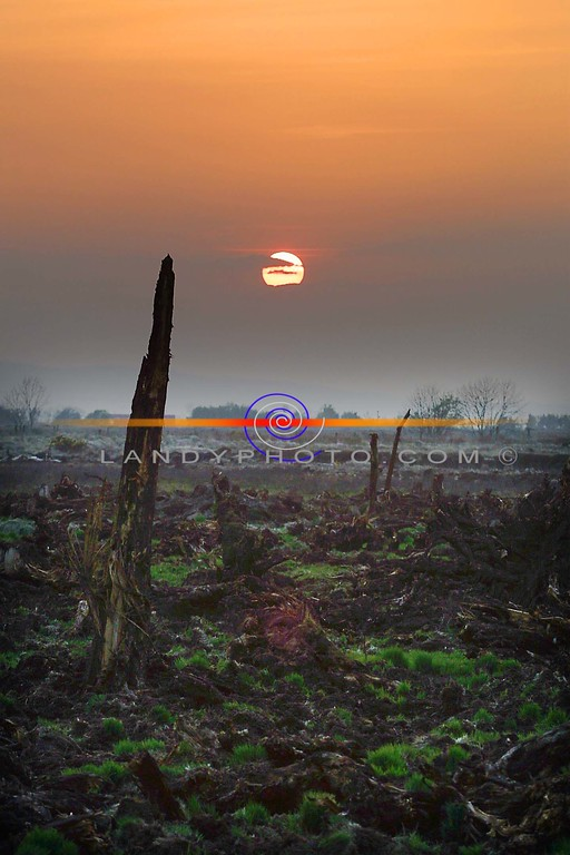 The Sun sets on Easter Sunday on a piece of reclamied bog oak that may not have seen this scene for over 5 thousand years ago, on a bogland between Tarbert and Listowel.<br /> Pic Brendan landy