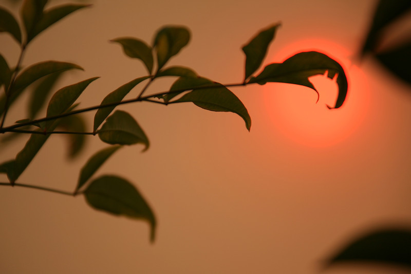 Twig Against Smoky Haze - Camarillo, CA