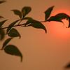 Twig Against Smoky Haze - Camarillo, CA