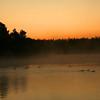 Ducks At Dawn - Grand Teton National Park - WY