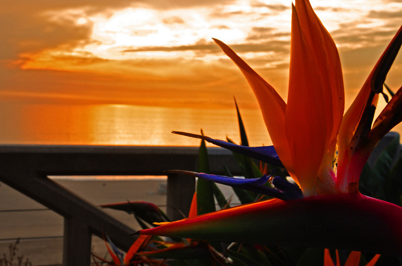 Paradise, Santa Monica, CA