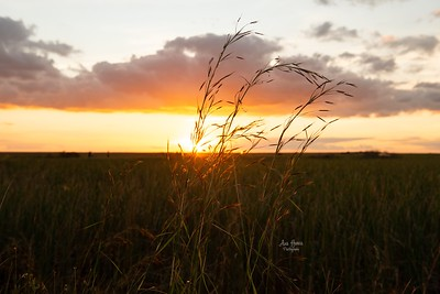 Sunset in Nature | Florida Nature and Landscape Photographer Ana Garcia Photography | Fine Art Photography Prints and Wall Art Decor