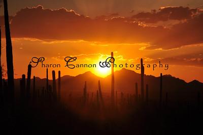 Saguaro National Park August 2010