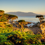 """Lone Cypress at Sunset"""