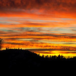 """Sunset above Yosemite National Park""  I captured this sunset above Yosemite National Park on the way to the Aperture Nature Photography Workshop.  Luckily I was running late, as the rest of the crew were in a hotel room while I captured the pine trees silhouetted against the best sunset of the trip."