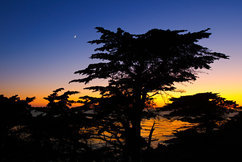 """Cypress and Moon at Dusk""  Big Sur, California"