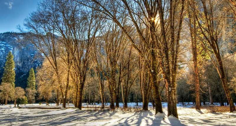 """Sunrise over Cooks Meadow""  We were shooting in Cook's Meadow and the trees were just beautiful in the cold morning sky.  I was looking around just trying to get this complex scene together.    I saw trees towering above me, but then off in the distant were those green pines.   The sun had just come up past the mountains and I captured this starburst through the trees.   Yosemite National Park, Aperture Nature Photography Workshop Contest Trip.  This image is available as a canvas giclée gallery wrap in sizes 16""x24"", 20""x30"", 28""x42"" and 38""x58"""