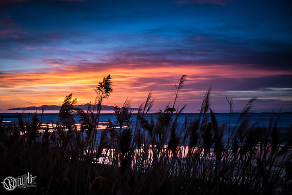 Cattails at sunset, #2