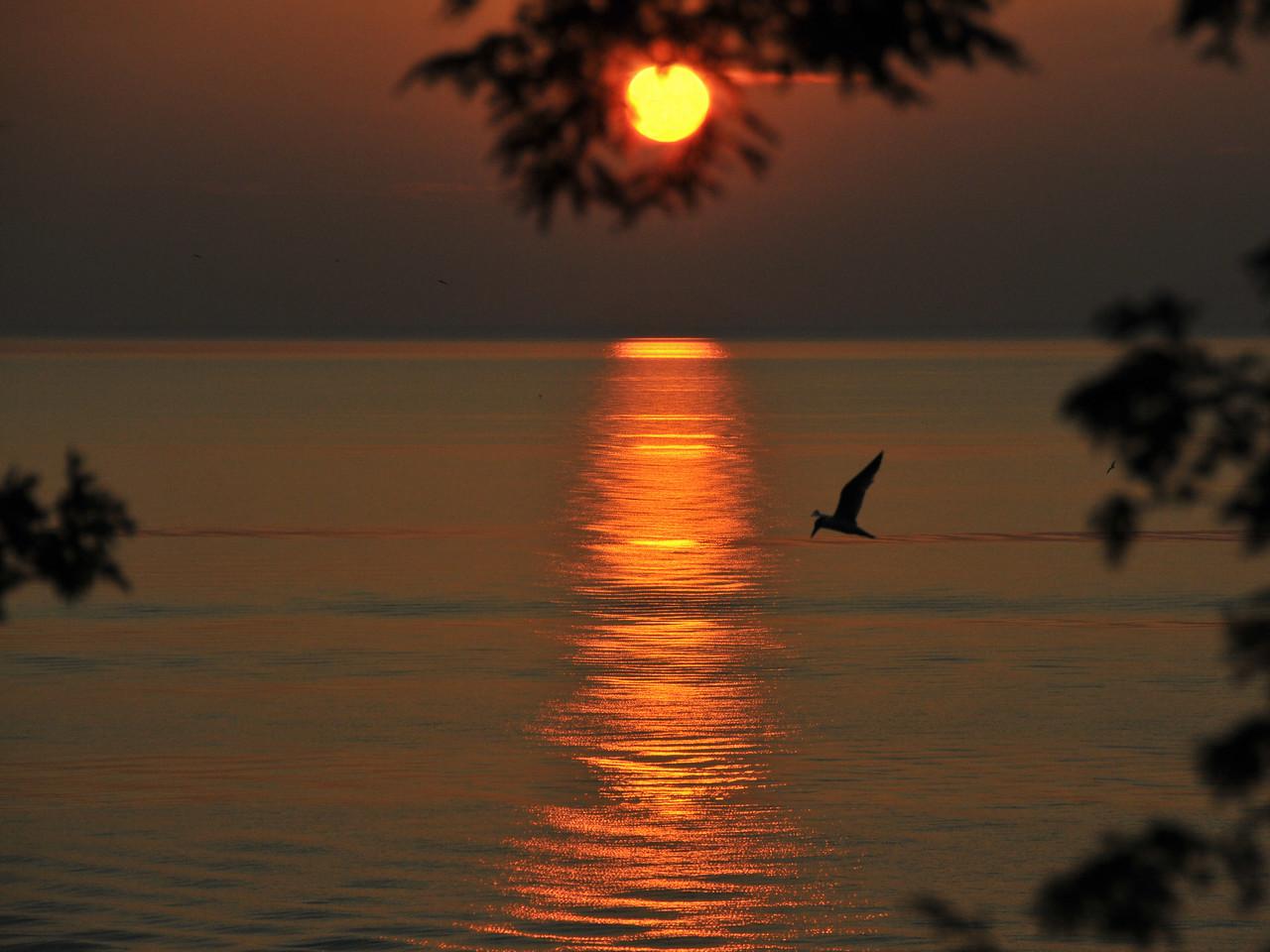Soaring At Sunset
