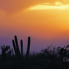 Sunset during dust storm in Jul7 20121 in Tucson A