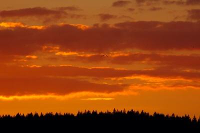 clouds_sunset3