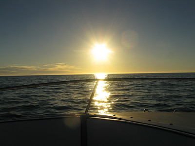 FL 2010 11 183