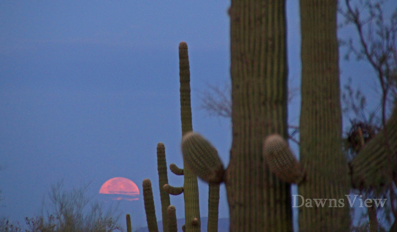 August early morning, moon setting in Tucson, AZ