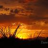 Tucson Sunset August 25, 2011.