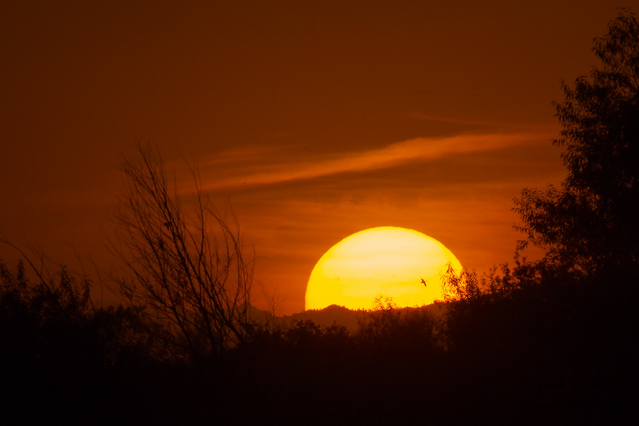 Sunset with birds - Bird Haven Ranch, Butte City, CA, USA