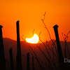 May 20, 2012 Eclipse, Tucson , AZ