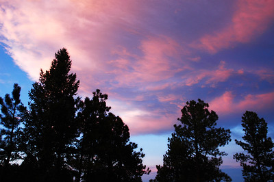 Sunset Swirl over Pine Trees