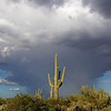 Saguaro against the afternoon clouds bursting open with rain.  Aug 27 2012