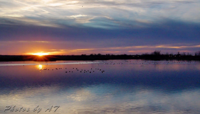 Teal Pond Riverlands Migratory Bird Sanctuary
