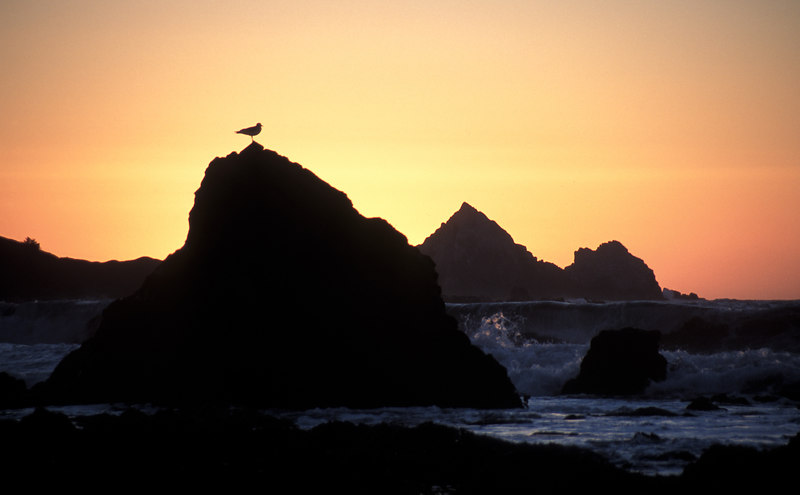Seagull on rocks at sunset. Pacifica, California
