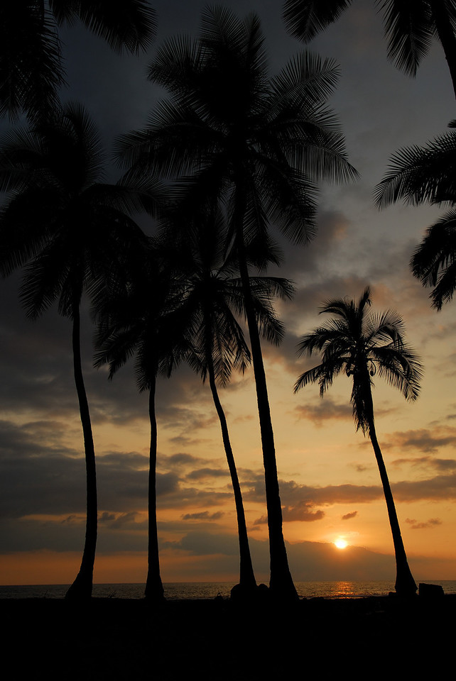Palm trees and setting sun at Pu'uhonnua O Honaunau (City of Refuge), Big Island, Hawaii