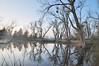 Gray Lodge WA Pond