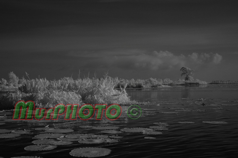 Infrared image from Lake Boeuf, south of New Orleans, May 2009.<br /> Shot with a Nikon D70S with 18-70 zoom lens.  Lifepixel modified the camera to shoot IR.