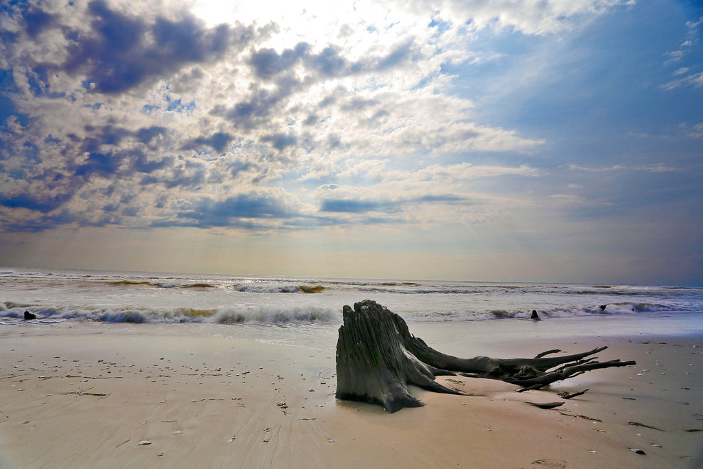 Stumps along the beachfront at Swan Beach are remnants of a forest that grew here hundreds of years ago, a reminder that the barrier islands and the sand are always on the move.