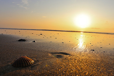 Searching for shells during a beautiful outer banks sunrise.