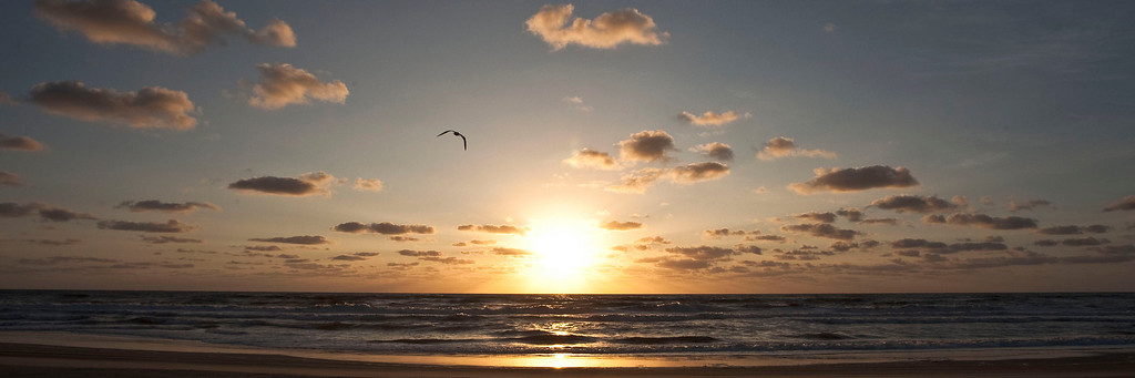 A gull flies in front of the rising sun at Swan Beach on the Outer Banks.