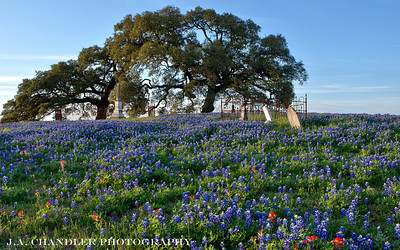 TEXAS WILD FLOWERS 2014