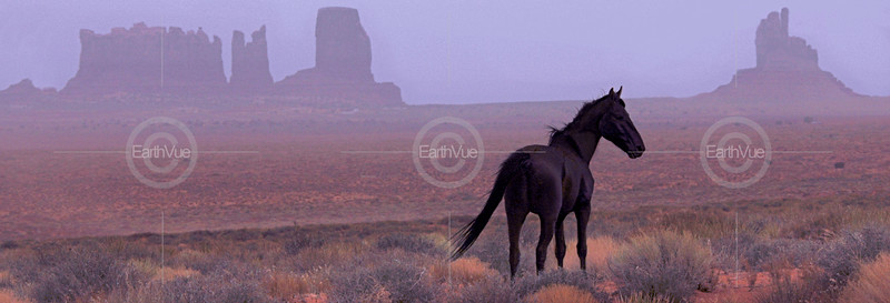 BLACK STALLION - MONUMENT VALLEY