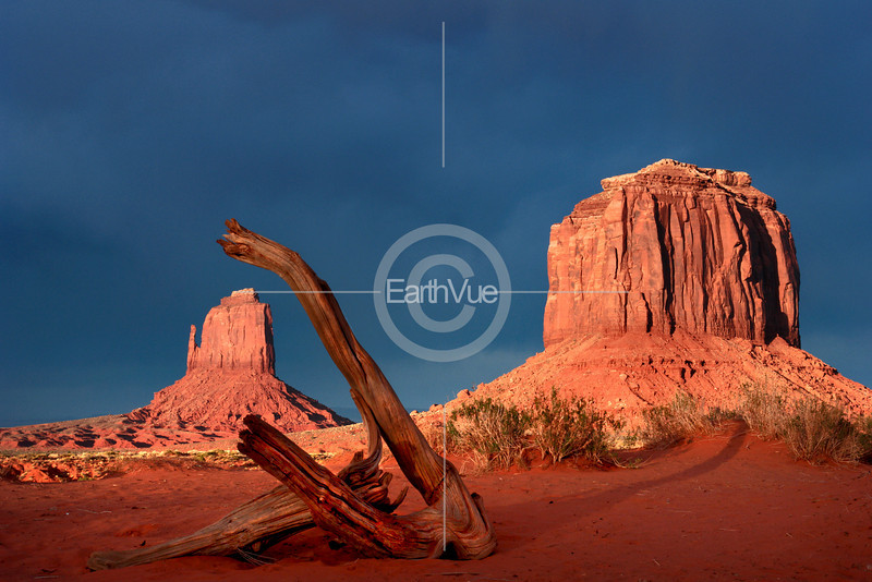 TREE TRUNK-MONUMENT VALLEY
