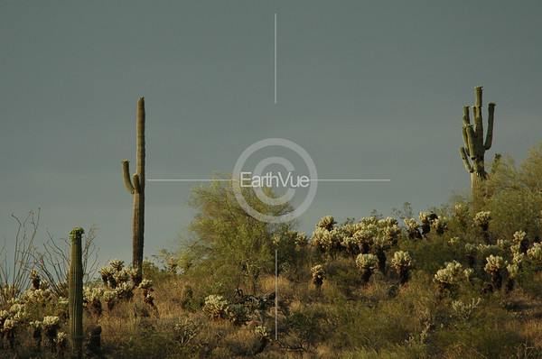 SAGUAROS AND CHOLLAS #2 - ARIZONA