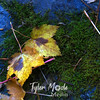 107  G Two Yellow Leaves and Moss