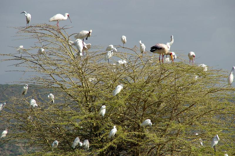 birdlife at Lake Manyara Nationalpark