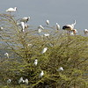 birdlife at Lake Manyara Nationalpark