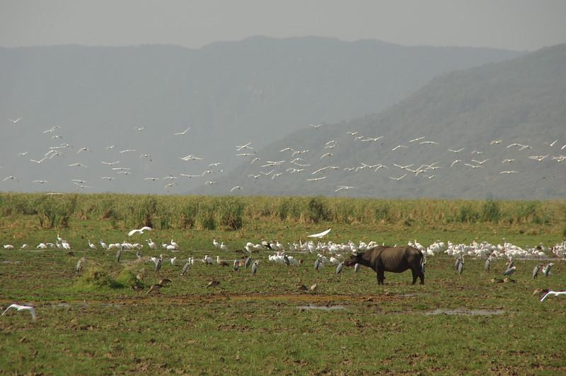 African Rift Valley /Lake Manyara Nationalpark
