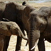 Elephant family in Tarangire Nationalpark