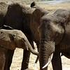 Elephant family in Tarangire Nationalpark