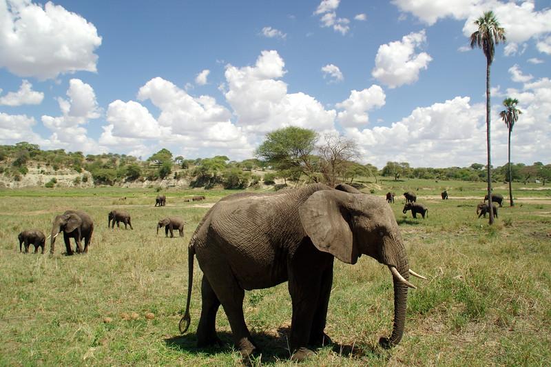 Tarangire Nationalpark - an elephant sanctuary
