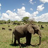 Tarangire Nationalpark - an elephant sanctuary
