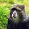 Hungry monkey at Miriakamba Hut