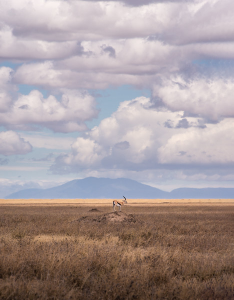 """We found this Thompson Gazelle standing on top of a mound, rather like playing """"King of the Hill"""". I composed this image placing the gazelle in the vastness of this setting, with white puffy clouds above."""
