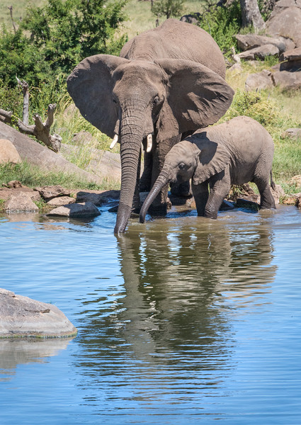 A Mom and her Baby having a sip of water on a hot day...To capture this image we did not have to travel far....This was the view from our room! Now that is picking the right location.